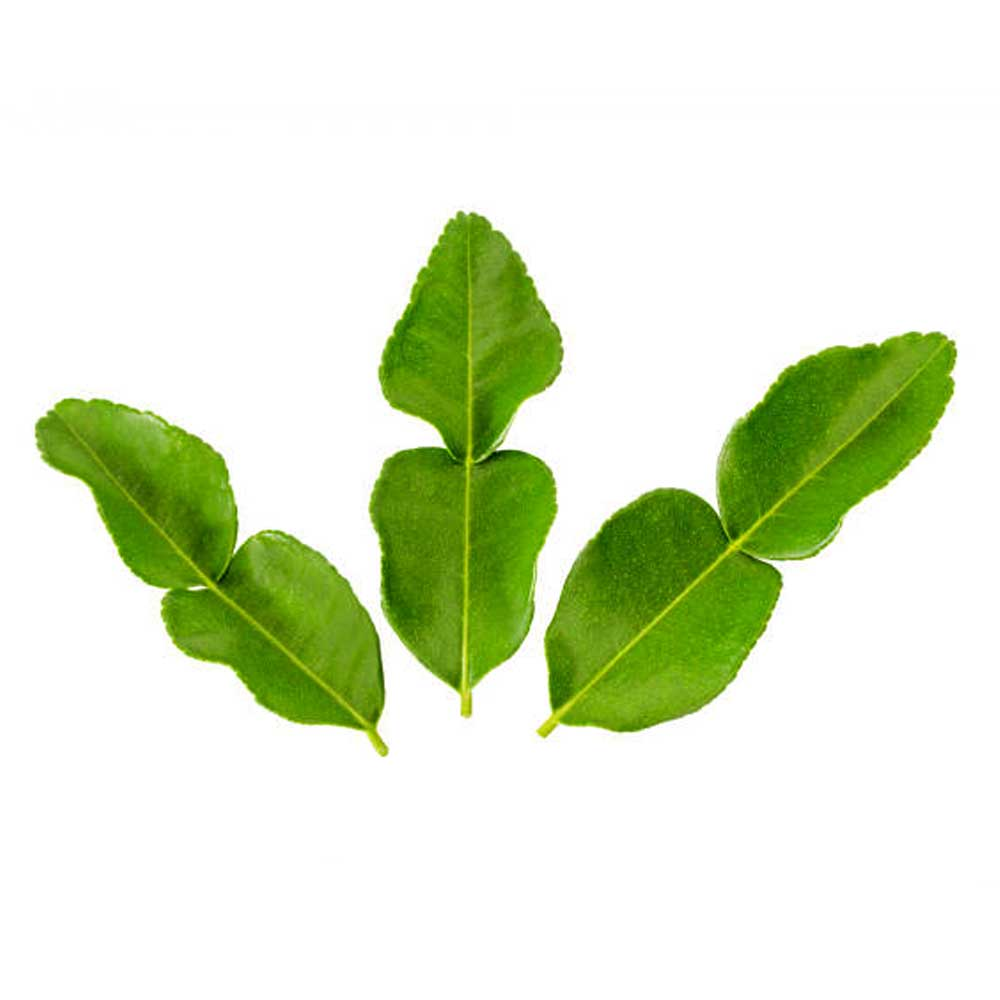 Thai Kafir Lime Leaves